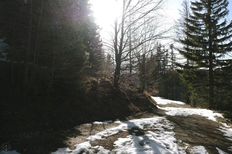 2017_03_17_Forstweg Schneeberg