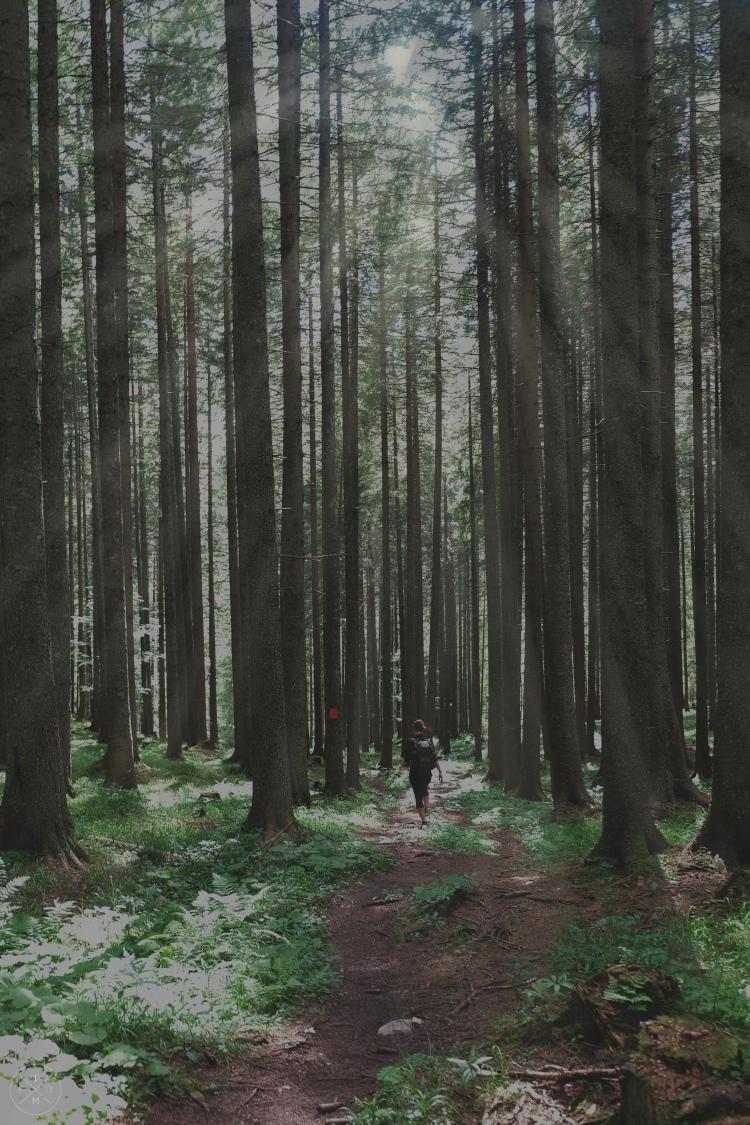 Tag3_Im Wald